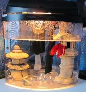 A home aquarium with a Whisper In-tank Filter and a male veil-tail betta.